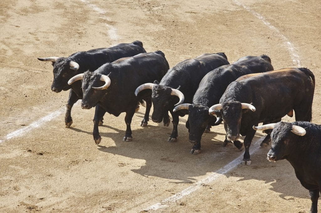 Fighting bulls in the arena. Bullring. Toro bravo. Spain. Horizontal